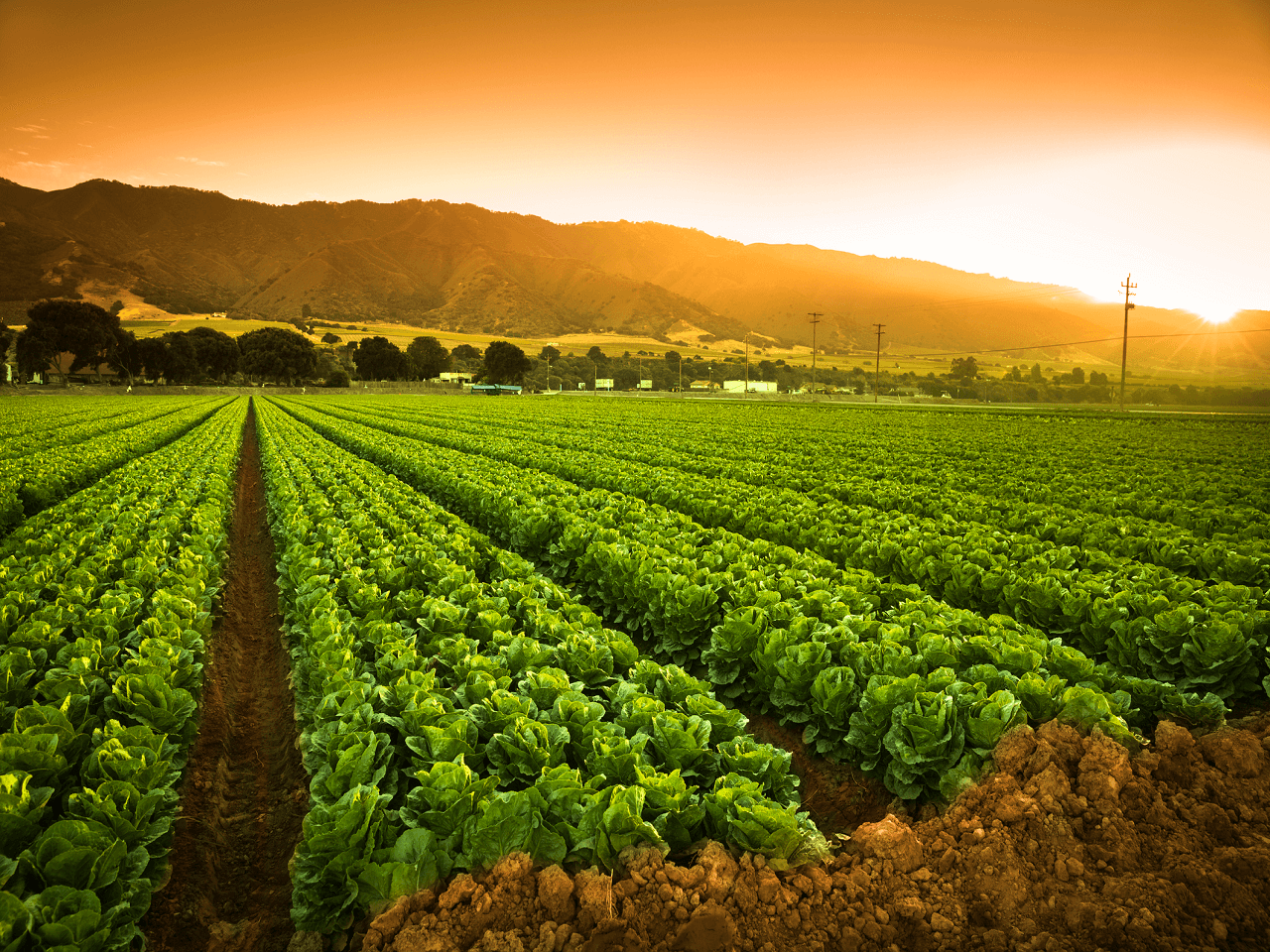 Bazı Tarım Ürünlerindeki Gözetim Uygulaması Kayda Almaya Dönüştürüldü