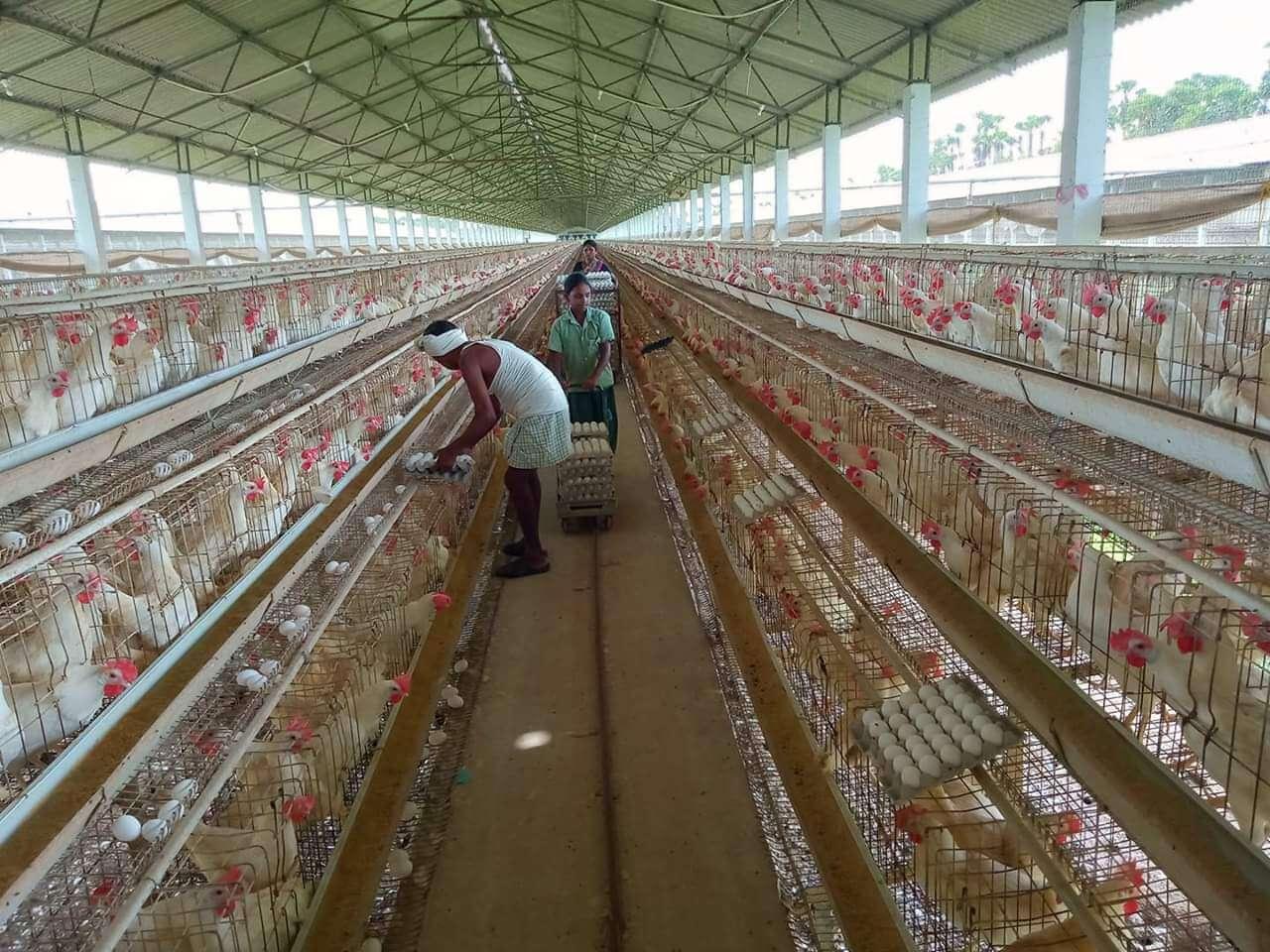 Çin ABD'den Kanatlı Et İthalatını 5 Yıl Aradan Sonra Yeniden Açıyor